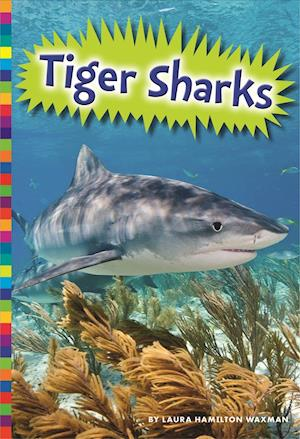 Bog, paperback Tiger Sharks af Laura Hamilton Waxman, Allan Morey