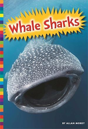 Bog, paperback Whale Sharks af Allan Morey