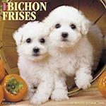 Just Bichons Frises 2018 Wall Calendar (Dog Breed Calendar)