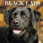 Just Black Labs 2018 Wall Calendar (Dog Breed Calendar)
