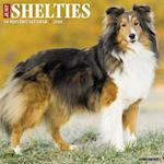 Just Shelties 2018 Wall Calendar (Dog Breed Calendar)