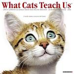 What Cats Teach Us 2018 Calendar
