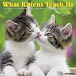 What Kittens Teach Us 2018 Wall Calendar