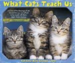 What Cats Teach Us 2018 Box Calendar