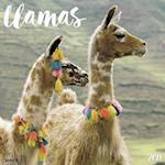 Llamas 2018 Calendar
