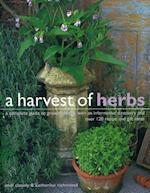 Harvest of Herbs