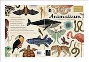 Bog, hardback Animalium af Jenny Broom