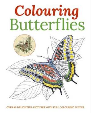 Colouring Butterflies