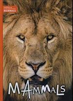 Mammals (Animal Classification)