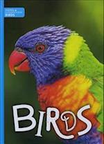 Birds (Animal Classification)