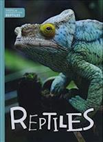 Reptiles (Animal Classification)