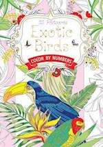 Exotic Birds Postcard Book Us (Hobbies and Craft)
