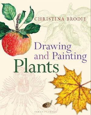 Drawing and Painting Plants