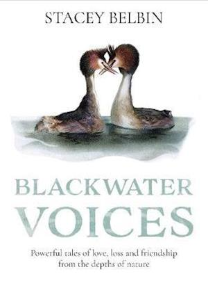 Blackwater Voices
