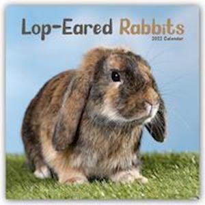 Lop-eared Rabbits - Kaninchen mit Hängeohren/Widderkaninchen 2022 - 18-Monatskalender