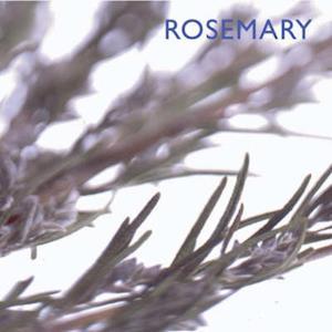 Bog, paperback Rosemary af Southwater