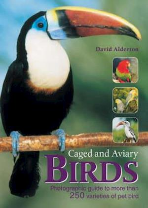 Bog, paperback The Encyclopedia of Caged and Aviary Birds af David Alderton