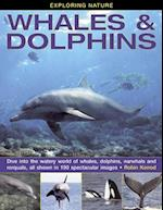 Exploring Nature: Whales & Dolphins af Robin Kerrod
