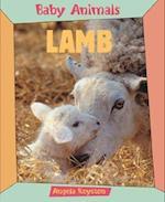 Lamb (Baby Animals)
