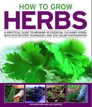 Bog, paperback How to Grow Herbs af Richard Bird