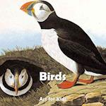 Birds (Art for Kids)