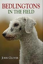 Bedlingtons in the Field
