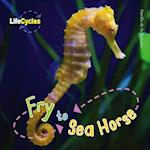 Fry to Seahorse (Lifecycles)
