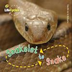 Life Cycles: Snakelet to Snake (Lifecycles, nr. 12)