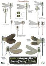 Guide to the Dragonflies and Damselflies of Britain (Occasional Publications S, nr. 53)