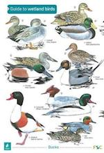 A Guide to Wetland Birds (Occasional Publications S)