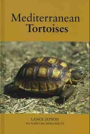 Mediterranean Tortoises