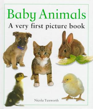 Bog, hardback Baby Animals af Nicola Tuxworth