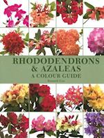 Rhododendrons and Azaleas af Kenneth Cox