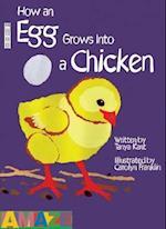 How An Egg Grows Into A Chicken (Amaze)