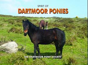 Spirit of Dartmoor Ponies