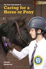 Keeping a Pony at Grass