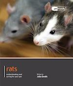 Rat - Pet Friendly