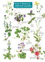 Guide to flowers of walks and waysides (FSC Fold out charts, nr. 176)