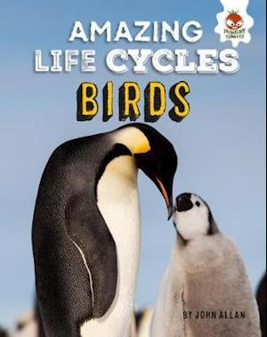 Birds - Amazing Life Cycles