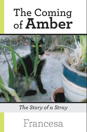 Bog, hæftet The Coming of Amber: The Story of a Stray af Francesa