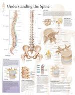 Understanding the Spine