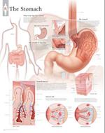 The Stomach Paper Poster