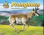 Pronghorn (Blink of an Eye: Superfast Animals)