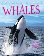 Whales (Animal Lives)