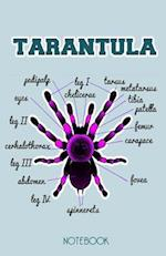 Tarantula Notebook
