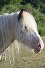 Sweet White Horse Portrait in the Sunshine Journal