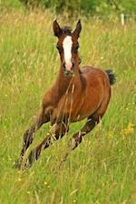 Sweet Brown Foal with White Markings Baby Horse Journal