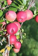 Notebook the Apple Orchard Ready to Pick