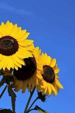 Notebook Stunning Sunflowers in Bloom