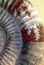 Notebook Ammonite Stone Fossil